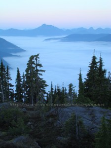 Foggy morning on Crest Mountain in Strathcona Park