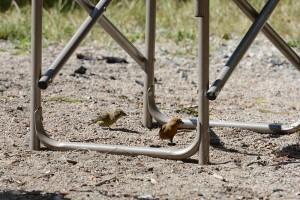 lower and upper klaklakama lake campgrounds birds