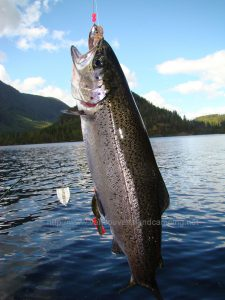 atluck lake rainbow trout from vancouver island camping